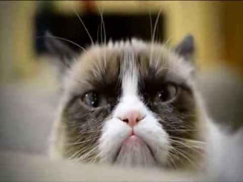 В Голливуде представили рождественский кошачий клип