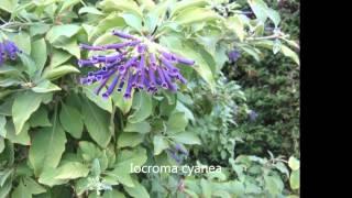 Arbustos ornamentales de los jardines de Valencia Y.T.