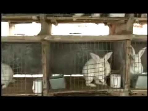 EASTER BUNNY - FUR Animal Abuse (Lent, Vegan, Easter Eggs, Rabbit, Pets, PETA) Religion Christian