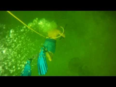 Go pro spear fishing hog fish