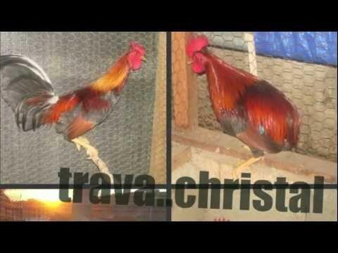"""Mario Realista- El Pollito Traba Crystal 2012"""" Prod By-M.E.P"""