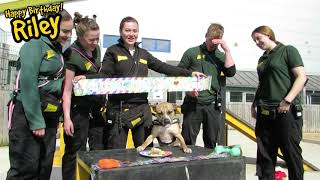 Dogs Trust Manchester - Riley