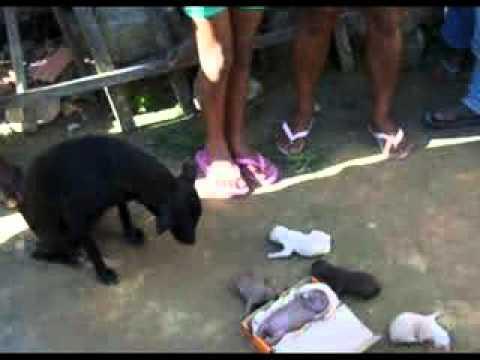 Anjing Melahirkan Bayi Seperti Manusia