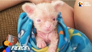 Newborn Albino Puppy Shows His Mom He's A Survivor - LUCKY | The Dodo Little But Fierce