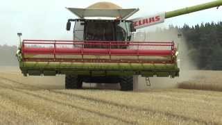 Harvester 2013 of Barley with Claas Lexion 670
