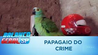 """Papagaio """"do crime"""" é resgatado pela Polícia Civil"""