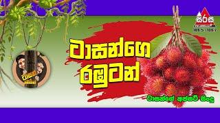 Tarzange Rabutan Gaha | Sirasa FM Tarzan Bappa Upset Song