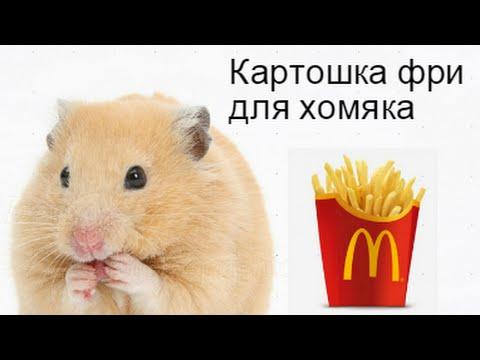 Картошка фри для хомяка
