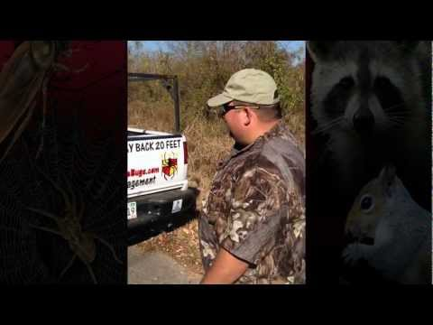 Wildlife Removal and Animal Control Smyrna TN