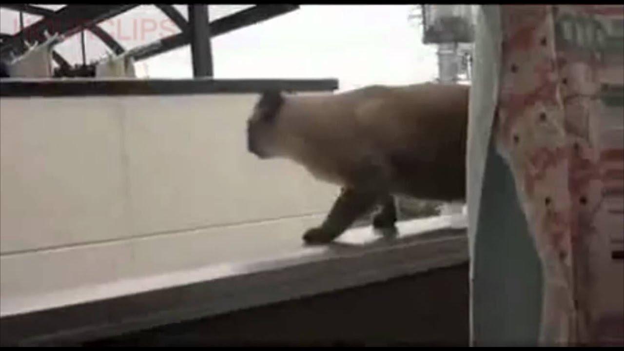 Fat Cat Fail Fat Cat Epic Jump Fail