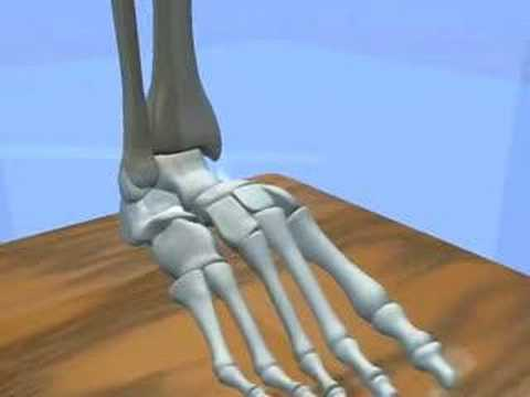 Ankle & Subtalar Joint Motion Function Explained Biomechanic of the Foot - Pronation & Supination