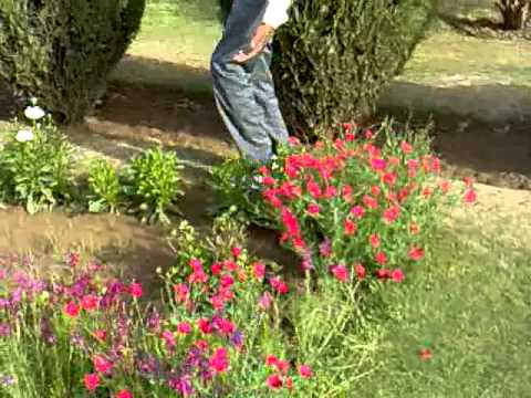 Punjabi University Patiala Department of Botany 2012-13 Satinder...