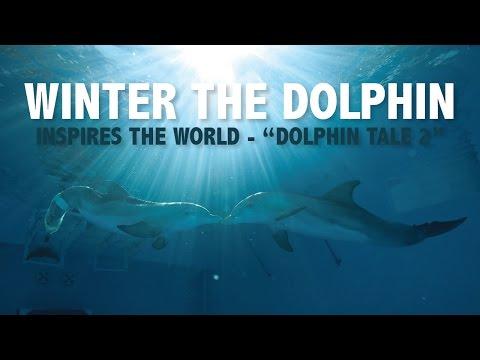 Dolphin Tale 2 Inspires So Many