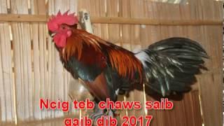 Ncig teb chaws saib noob qaib dib , qaib qus 2017