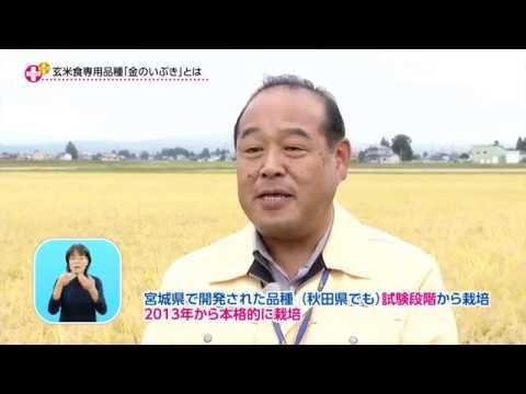 消費者ニーズに応じた米作りを!