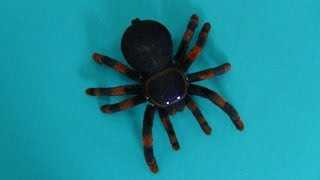 Tarantula. Real like spider tarantula. Unboxing radio controlled toy for children