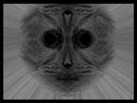 INTERNET VIRAL VIDEO