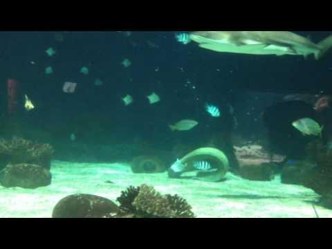 Vancouver loan shark