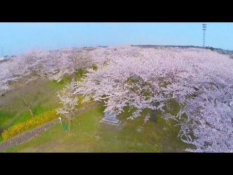空から見た新潟県の桜名所