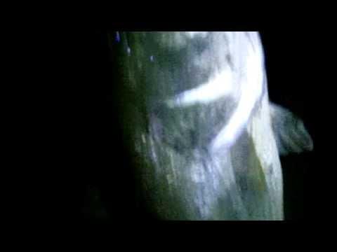 Beadhead Bunny Leech-discount fishing flies-BigYFlyCo.Com