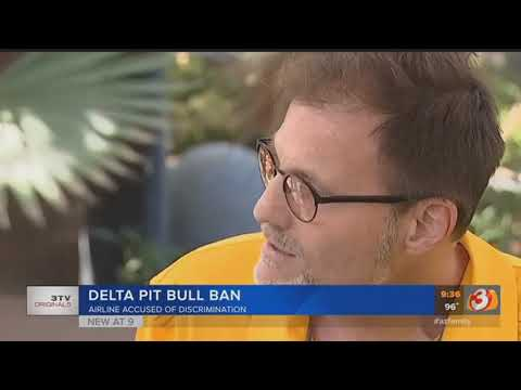 VIDEO: Pit bull advocates upset over Delta's ban on 'pit bull type dogs'