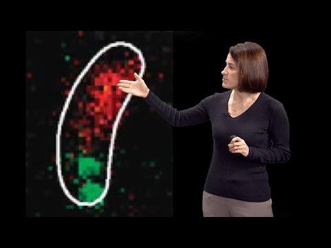 Christine Jacobs-Wagner (Yale, HHMI) 2: DNA segregation & active intracellular transport in bacteria