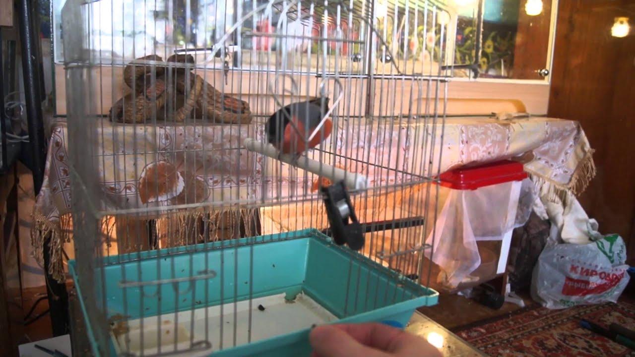 Сонник птиц в клетку сажать 51