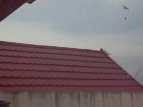 Uji Suara Walet Di Sulawesi Selatan By: Kang Mas Kelod