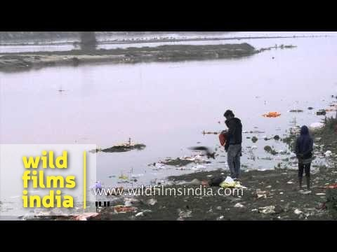 Sutlej river in Ludhiana is as polluted and dirty as the Yamuna in Delhi