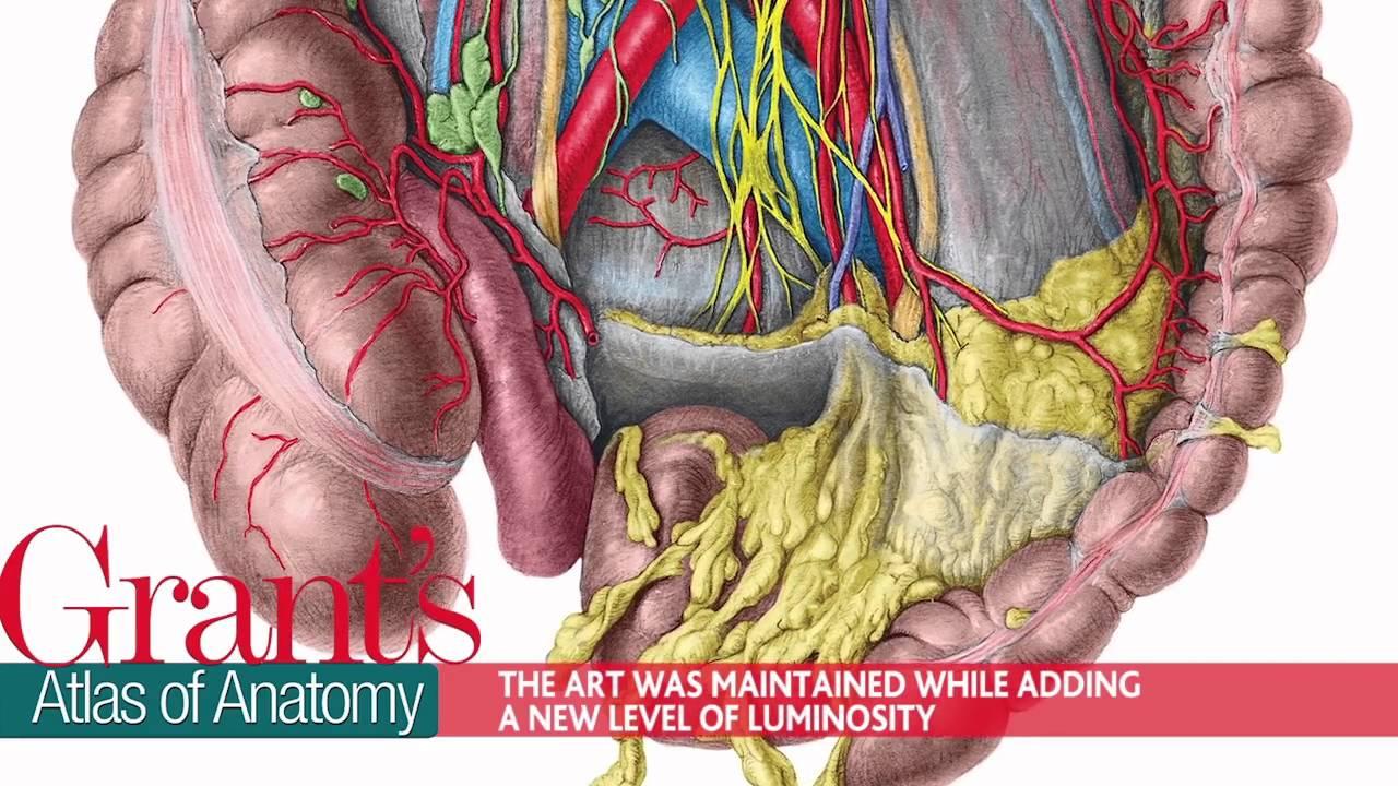 Grants atlas of anatomy