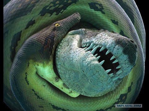 Самые опасные животные мира. Амазония