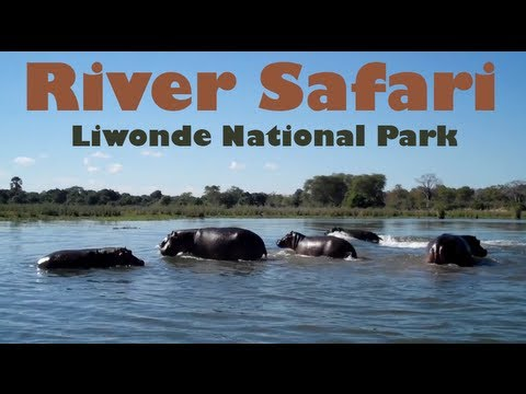 Taking a River Safari - Liwonde National Park, Malawi