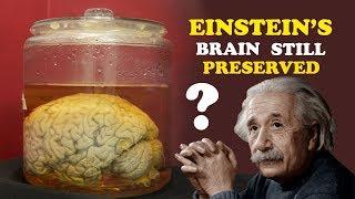Why is Einstein's Brain Still Preserved? The mystery of Einstein's Brain I Impacting Future Series