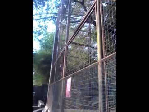 Monyet Di Kebun Binatang video