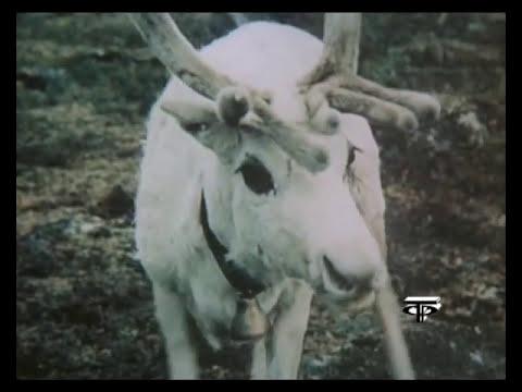 Белый олень тундры художественный фильм