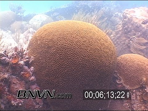 Tropical Reef Fish Tank footage part 2
