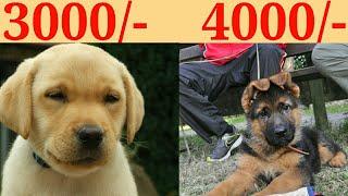 DOG PRICE IN INDIA 2019/DOG PRICE LIST IN INDIA/ KOLKATA PET CARE
