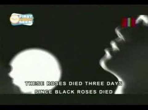 Chicosci - 7 Black Roses