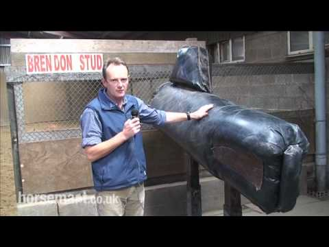 Horsemart: How to set a safe environment for stallion semen collection