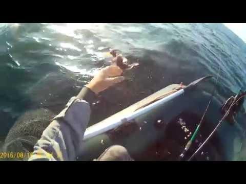 лодка сарган видео