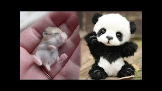 Funny and Cute Animals Doing Funny Things 2019