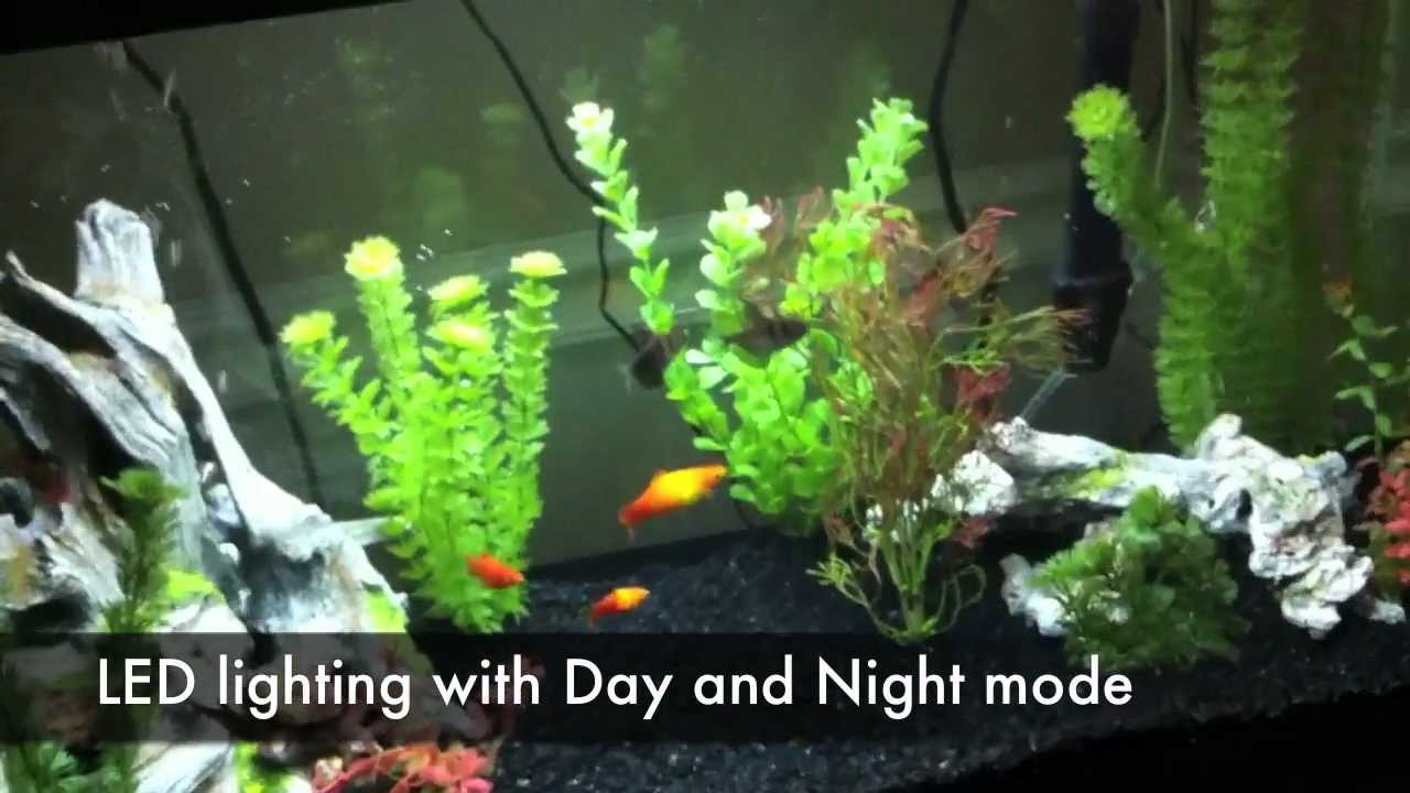 30 gallon fish tank youtube beautiful 30 gallon fish for Youtube fish tank