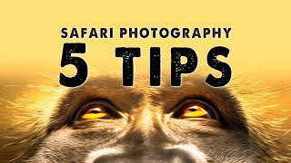 5 Tips for photography on a Wildlife Safari