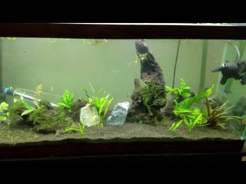 Part two... adding ADA amazonia aqua soil to an existing aquarium and the cycling process