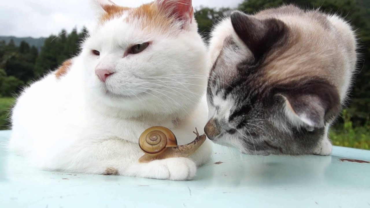 [That Time Two Cats And A Snail Started To Lick Each Other] Video