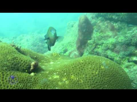 Bay of Bengal (Underwater Nature Bangladesh )