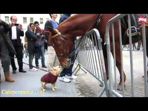 Most Funny Horse Videos 2014