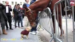 3d Game   Funniest Horse Videos 2014   Funniest Horse Videos 2014