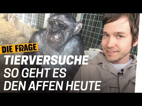 Was Tierversuche mit Affen machen | Warum lassen wir Tiere leiden? Folge 3