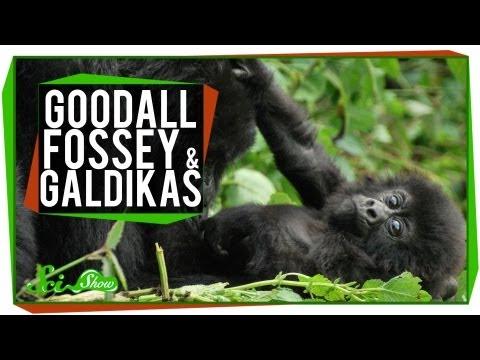 Goodall, Fossey & Galdikas: Great Minds